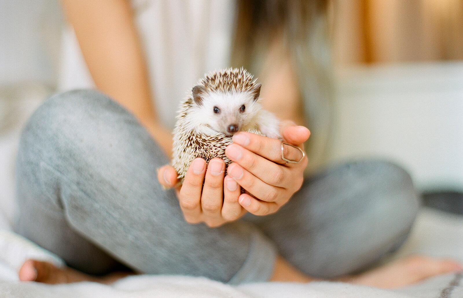 150 Pet Hedgehog Name Ideas   LoveToKnow
