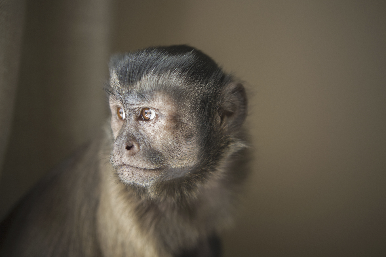 Buying A Pet Monkey Lovetoknow