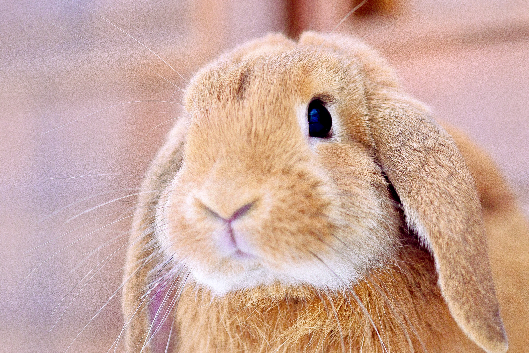 150 Female Rabbit Names From Unique To Famous Lovetoknow