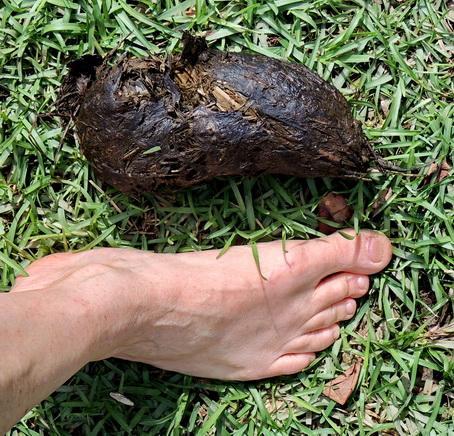 https://cf.ltkcdn.net/small-pets/images/slide/240461-454x436-4-tortoise-poop.jpg