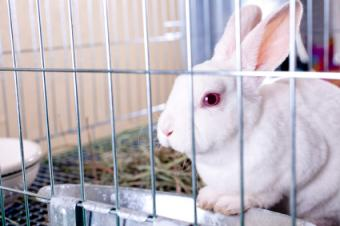 Used Rabbit Cage Tips