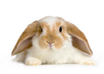 Pet Rabbit Names