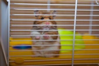 Hamster cage with proper bar spacing