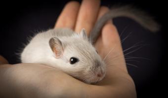 Holding a gerbil; © Anna Kucherova   Dreamstime.com