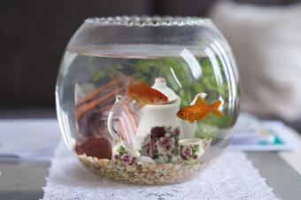 Goldfish bowl tea set decor