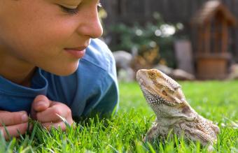 Names for Pet Reptiles