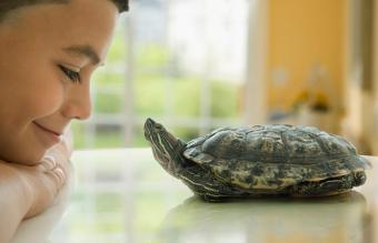 boy smiling at turtle