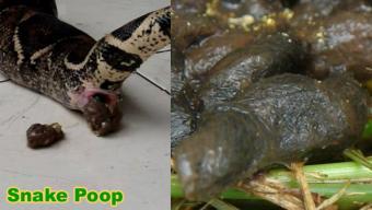 https://cf.ltkcdn.net/small-pets/images/slide/240462-654x370-6-snake-poop.jpg