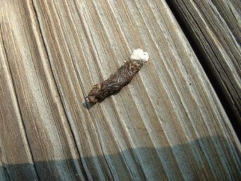 https://cf.ltkcdn.net/small-pets/images/slide/240467-500x375-15-skink-poop.jpg