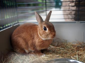 Care and Feeding of Pet Rabbits
