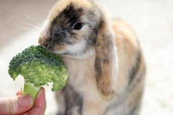 bunny eating broccoli