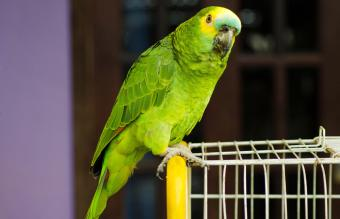 Parrot Perching On Cage