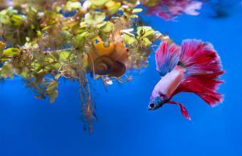 Great Betta Fish Tank Mates
