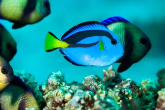 Creative Names for Blue Fish