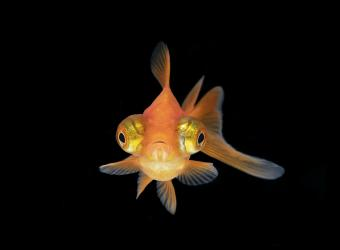 Cute Fish Names for Your New Pet Fish