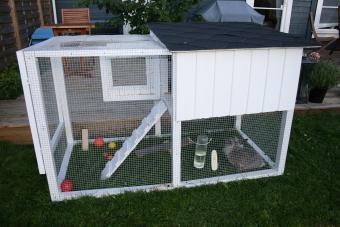 Rabbit toys in rabbit cage
