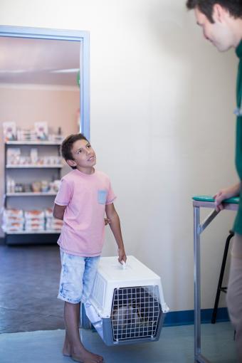 Rabbit in carrier at vet