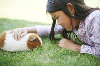 Girl with pet guinea pig