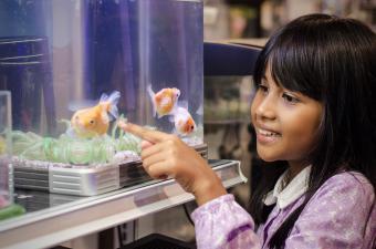 girl looking at fish in aquarium