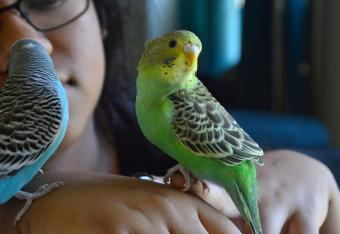 Woman Holding Budgerigars