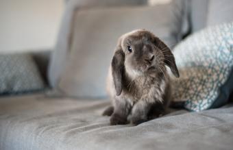 Cute bunny on the sofa