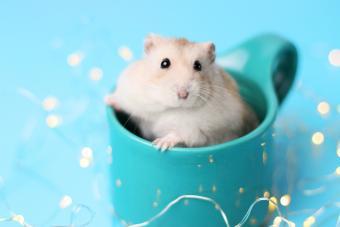 Dwarf hamster sitting in a mug