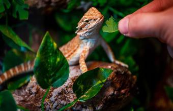 Intelligent Characteristics of Reptiles