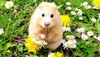275+ Cute Hamster Names for Boys and Girls