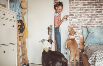 How to Become a Professional or Part-Time Pet Sitter