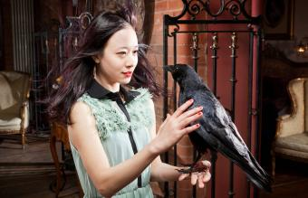 Pet Crow Facts, Restrictions, and Care