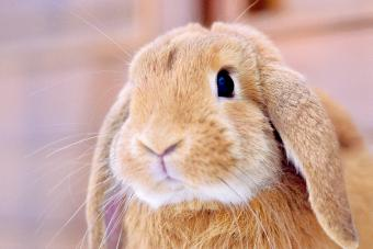150+ Female Rabbit Names From Unique to Famous