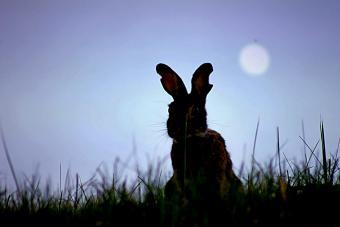 Rabbit On Grassy Field Against Sky At Dusk