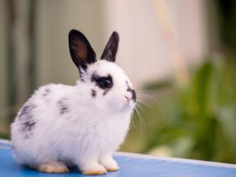 Young rabbit sitting on table