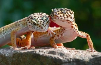 Creative Leopard Gecko Names for Males and Females