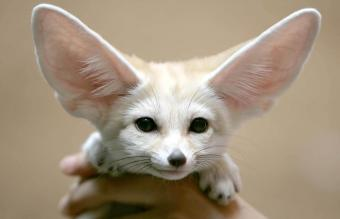 Best Exotic Small Pets That Are Easy to Own