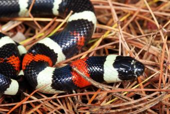 Best Pet Snake Breeds for Beginners to Own
