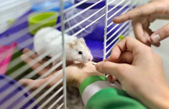 Children feeding a hamster