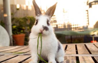 120 Unique Boy Rabbit Names