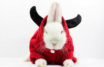 Dwarf rabbit with horned disguise