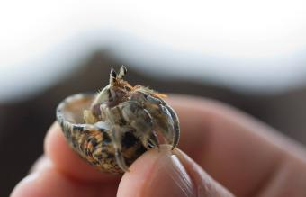 hermit crab hold in hand