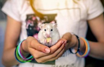 150 Adorable Pet Mouse Names