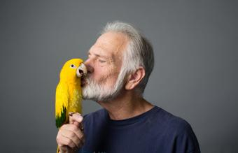 Man kissing golden parakeet