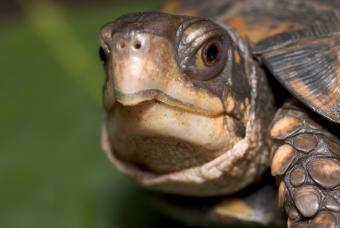 How to Tell If a Turtle Is Dying: Typical Signs
