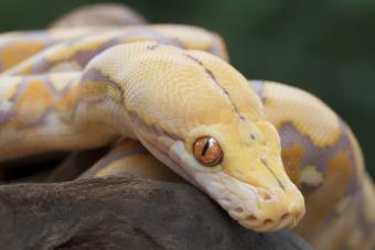 How Do I Know If My Snake Is Dying?