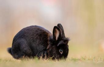 Rabbit Digging Made Simple: Learn Their Instincts