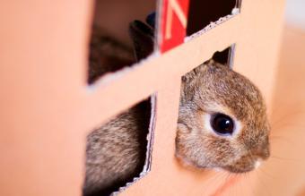 Bunny in cardboard box maze