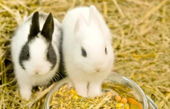 Best Rabbit Food Brands for a Healthy Pet