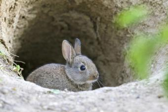 Wild Bunny Burrow