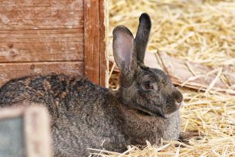 Best Rabbit Bedding From Brands to DIY Ideas