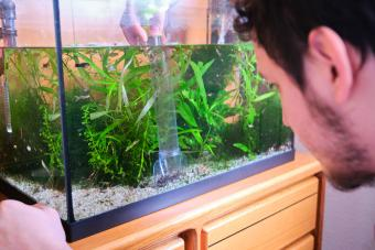 Easy Fixes for a Cloudy Fish Tank